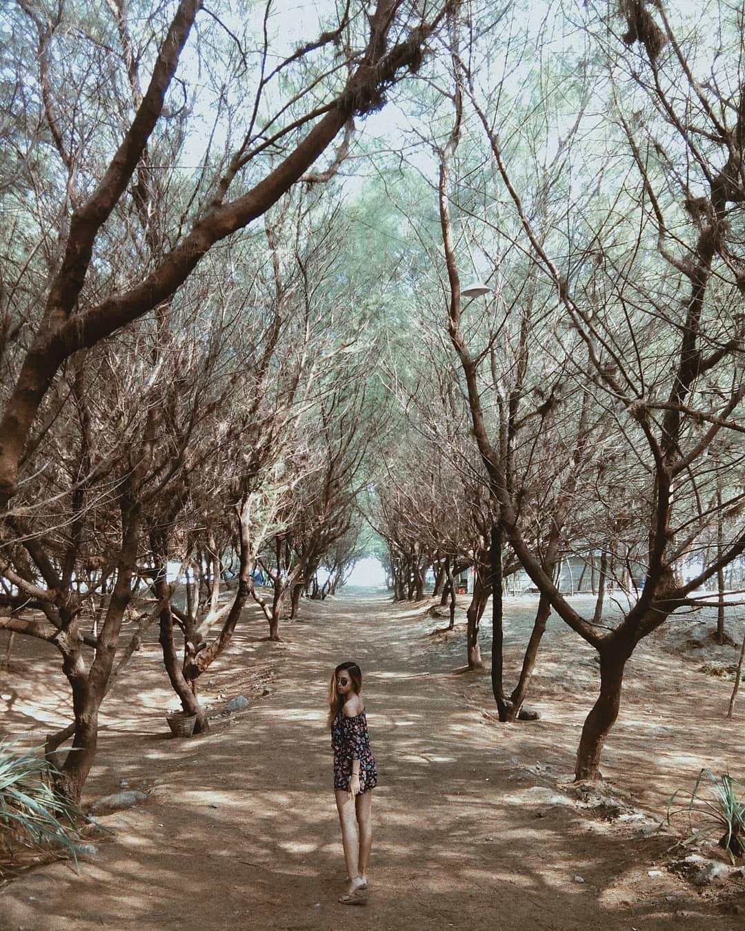 Pantai Cemoro Sewu, Pantai Eksotis Jogja dengan Jejeran Pohon Cemara